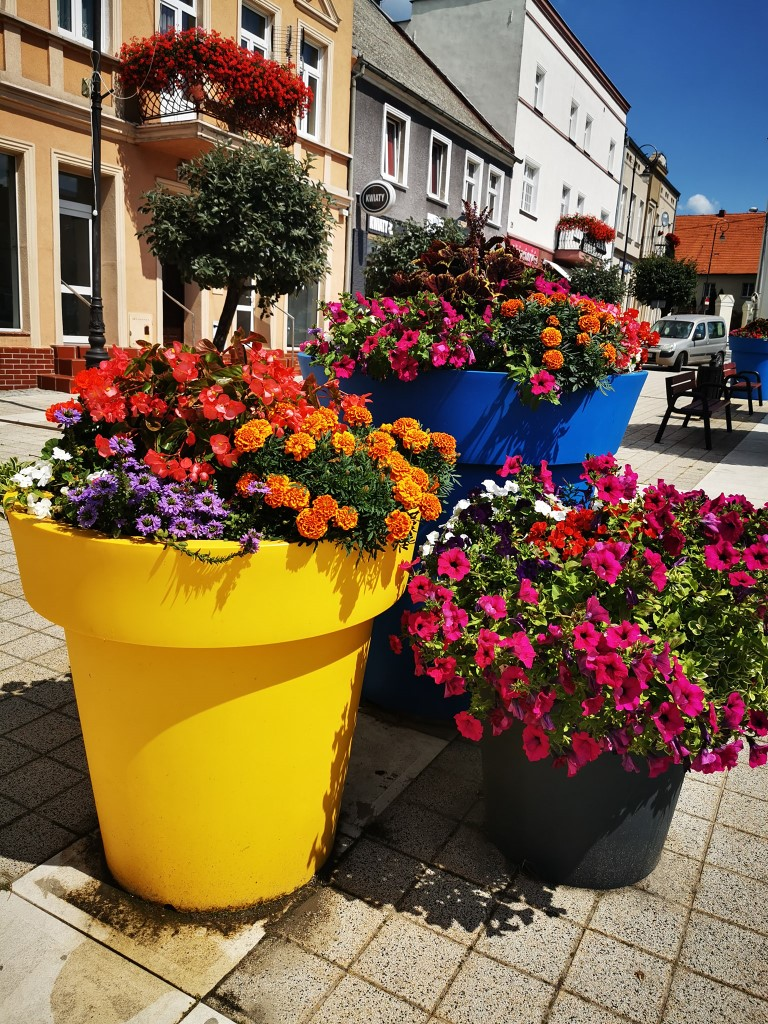 flower-city-compositions